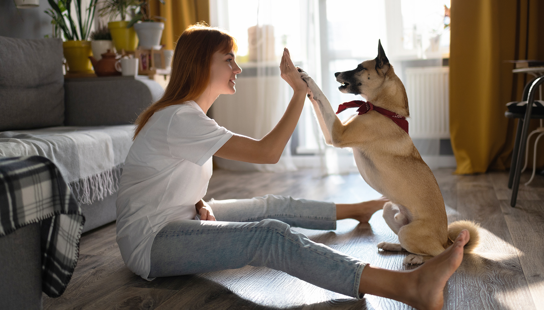 dog owner teaching pet at home